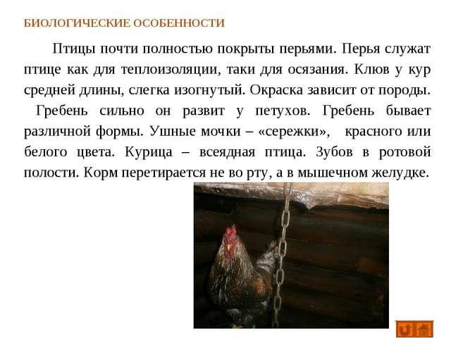 БИОЛОГИЧЕСКИЕ ОСОБЕННОСТИ Птицы почти полностью покрыты перьями. Перья служат...