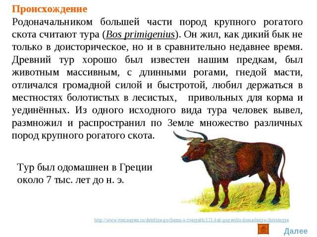 Происхождение Родоначальником большей части пород крупного рогатого скота счи...