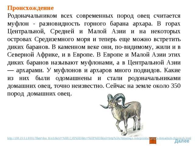 Происхождение Родоначальником всех современных пород овец считается муфлон -...