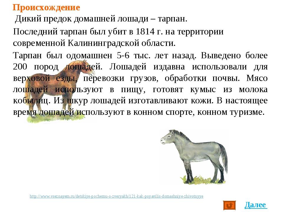 Происхождение Дикий предок домашней лошади – тарпан. Тарпан был одомашнен 5-6...