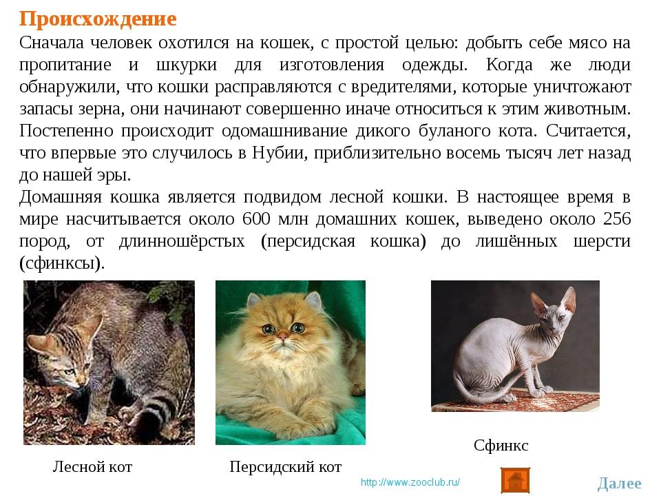 Происхождение Сначала человек охотился на кошек, с простой целью: добыть себе...