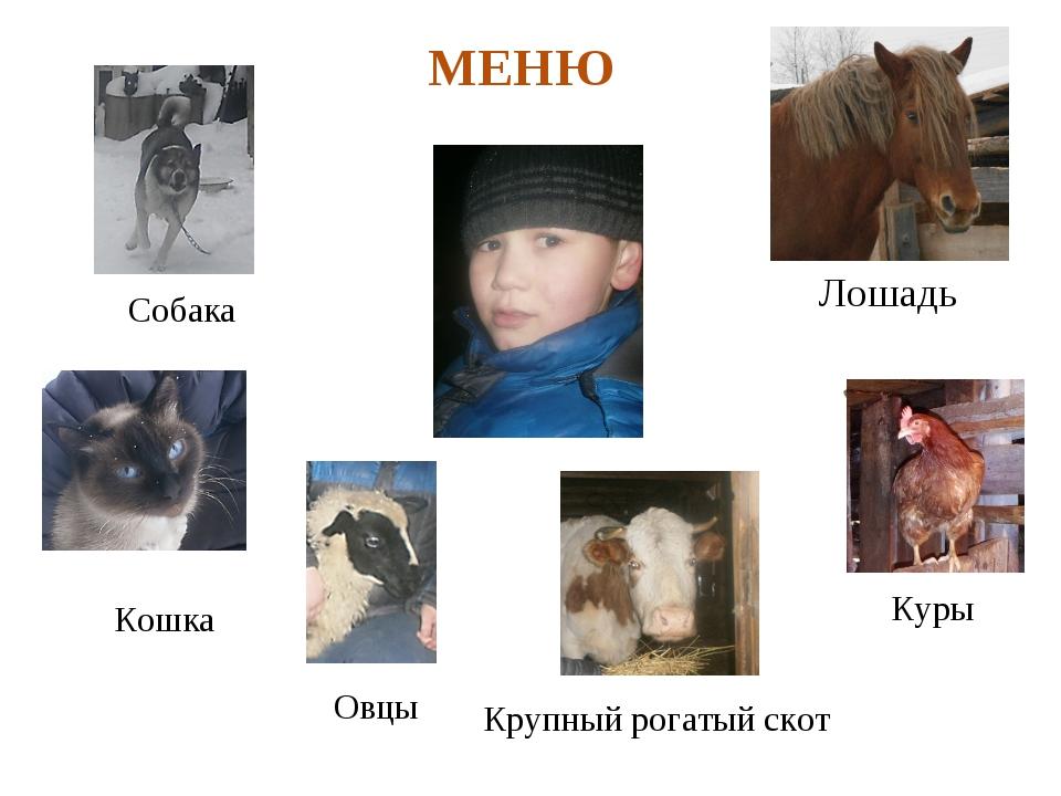 Куры Лошадь Крупный рогатый скот Собака Овцы Еж Кошка МЕНЮ