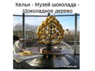 Кельн - Музей шоколада - Шоколадное дерево