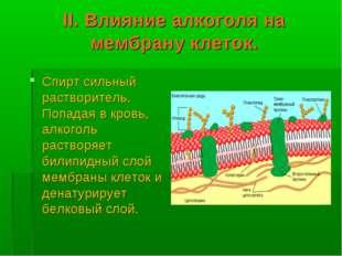 II. Влияние алкоголя на мембрану клеток. Спирт сильный растворитель. Попадая