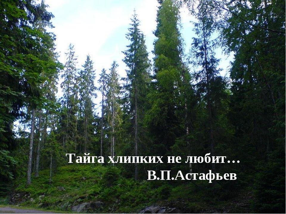 Тайга хлипких не любит… В.П.Астафьев