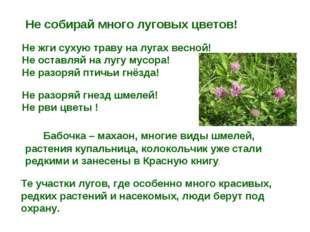 Не собирай много луговых цветов! Не жги сухую траву на лугах весной! Не оста