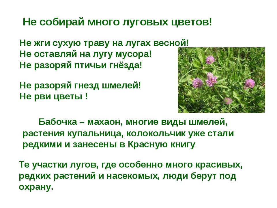 Не собирай много луговых цветов! Не жги сухую траву на лугах весной! Не оста...