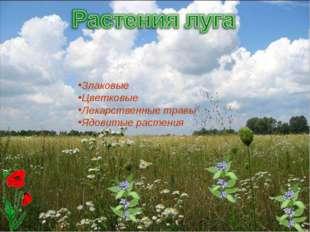 Злаковые Цветковые Лекарственные травы Ядовитые растения