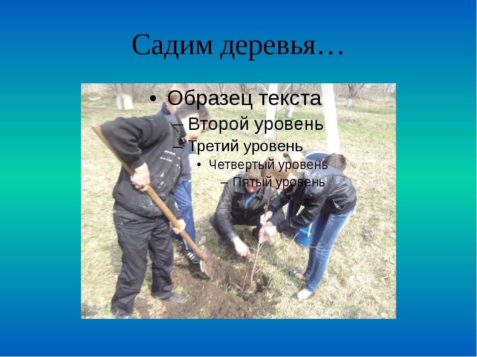 Садим деревья…
