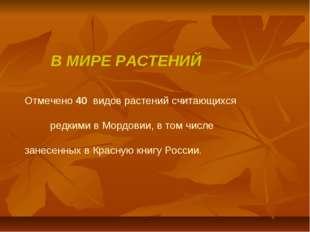 В МИРЕ РАСТЕНИЙ Отмечено 40 видов растений считающихся редкими в Мордовии, в