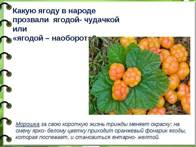 Какую ягоду в народе прозвали ягодой- чудачкой или «ягодой – наоборот»? Морош...