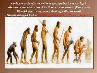 Отделение ветви человеческих предков от предков обезьян произошло от 3 до 5 м
