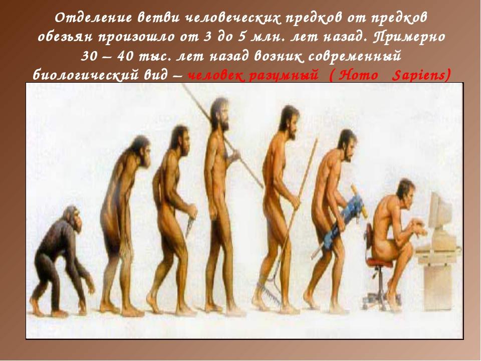 Отделение ветви человеческих предков от предков обезьян произошло от 3 до 5 м...
