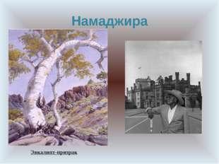 Намаджира Эвкалипт-призрак