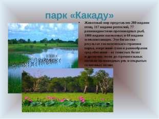 парк «Какаду» Животный мирпредставлен 280 видами птиц, 117 видами рептилий,