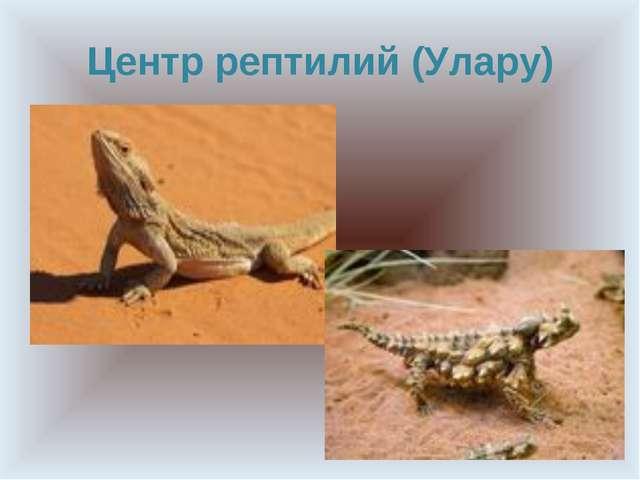 Центр рептилий (Улару)