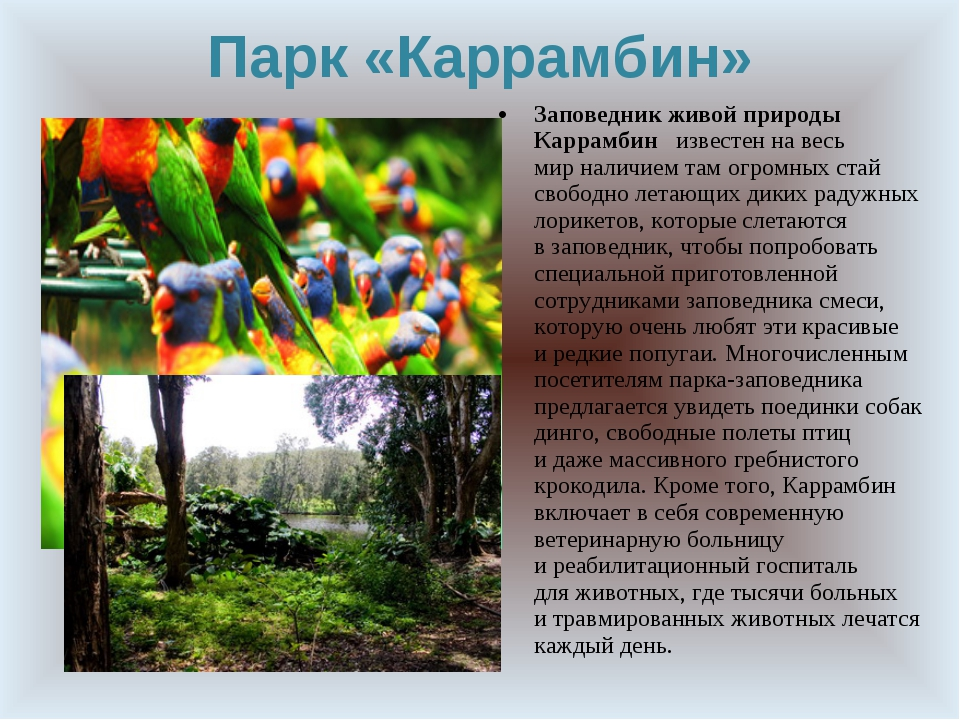 Парк «Каррамбин» Заповедник живой природы Каррамбин известен навесь мирнали...
