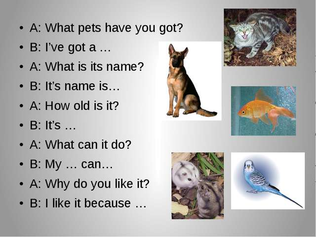 A: What pets have you got? B: I've got a … A: What is its name? B: It's name...
