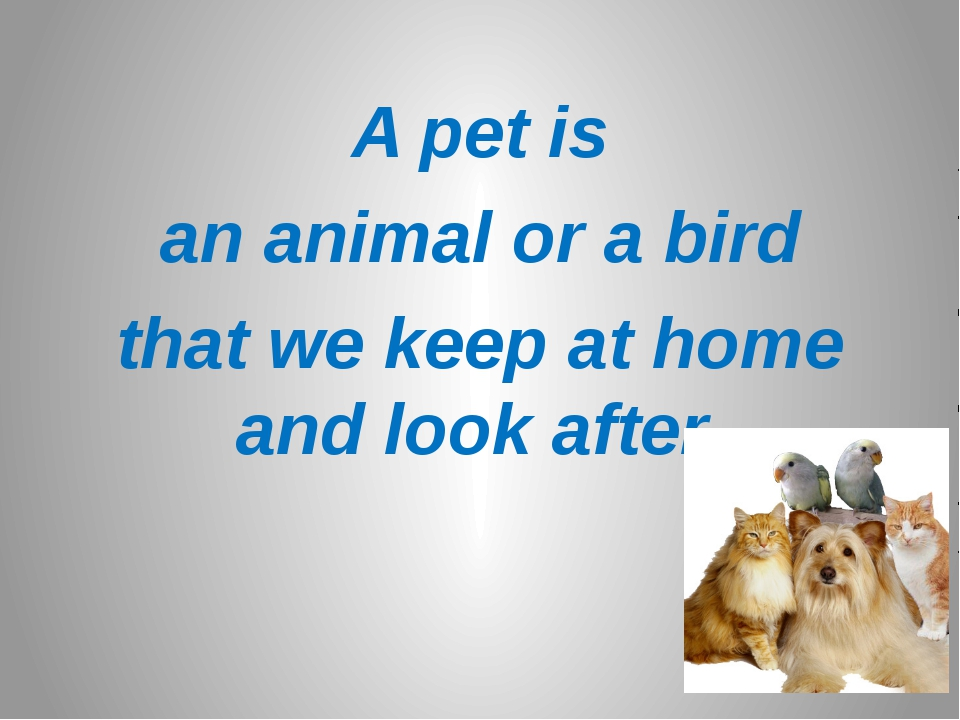 A pet is an animal or a bird that we keep at home and look after.
