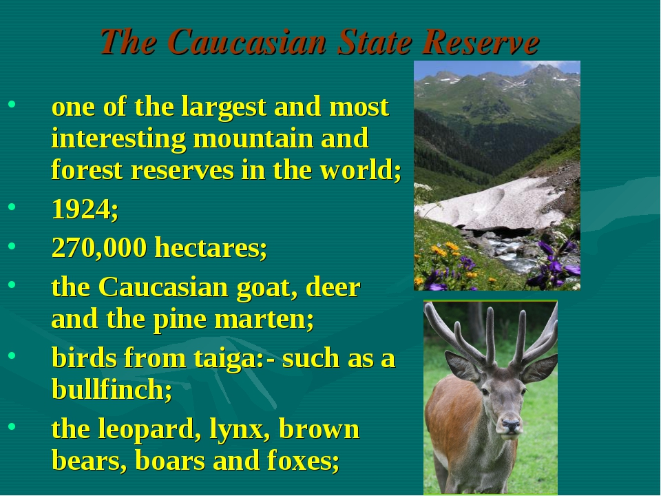 The Caucasian State Reserve one of the largest and most interesting mountain...