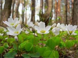 В лесу нельзя шуметь. Весной птицы и звери ждут потомство. Не пугайте их. Не
