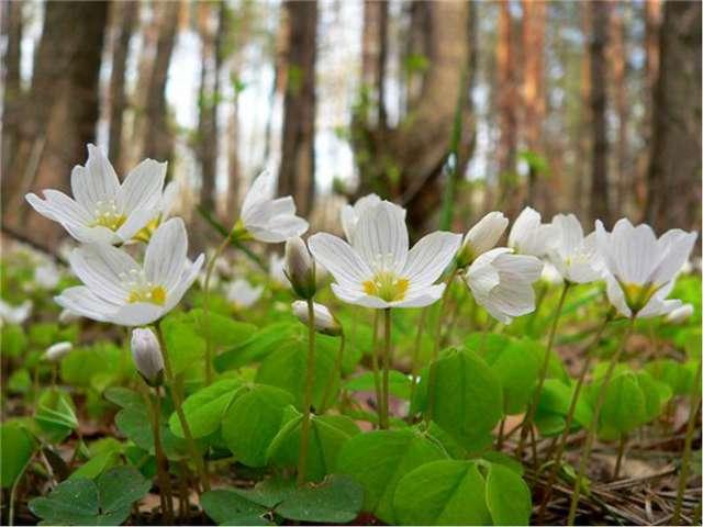 В лесу нельзя шуметь. Весной птицы и звери ждут потомство. Не пугайте их. Не...