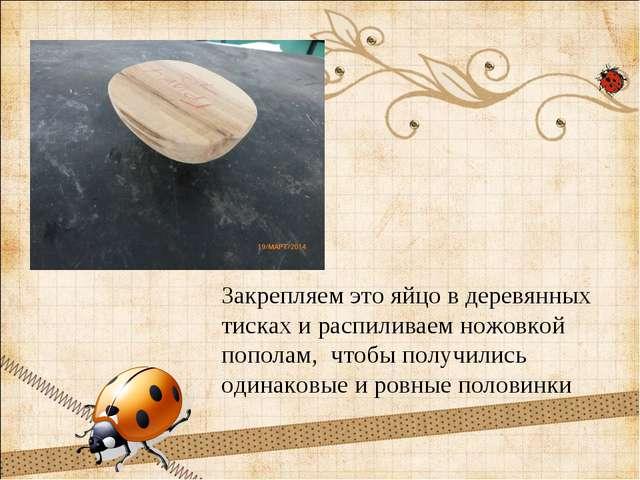 Закрепляем это яйцо в деревянных тисках и распиливаем ножовкой пополам, чтобы...