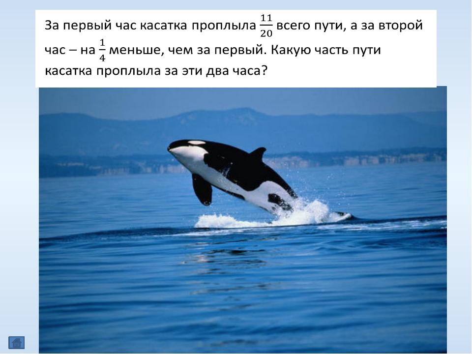 КЕТОЛОГИЯ (др.-греч.κῆτος, откудалат.cētus— «огромное морское животное, м...