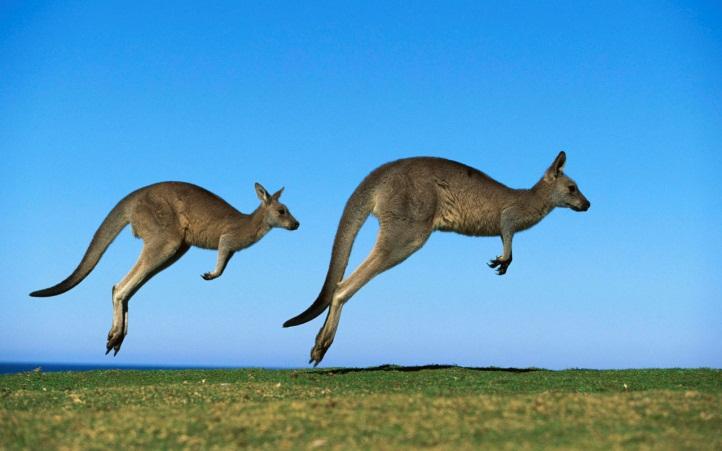 http://kolyan.net/uploads/posts/2010-02/1266900351_animals_beasts_kangaroo_019483_.jpg