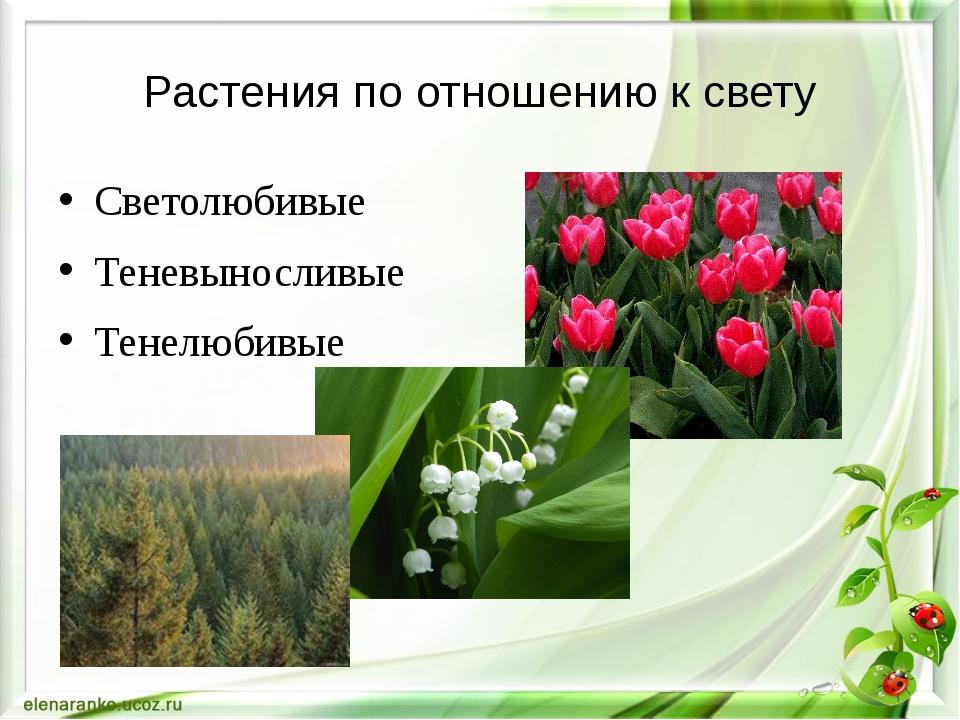 Растения по отношению к свету Светолюбивые Теневыносливые Тенелюбивые
