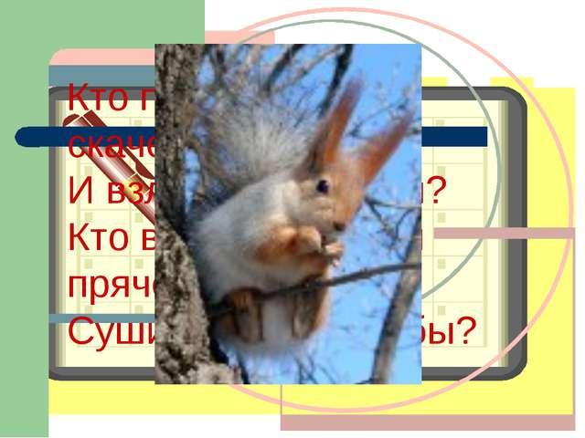 Кто по ёлкам ловко скачет И взлетает на дубы? Кто в дупле орешки прячет, Суш...