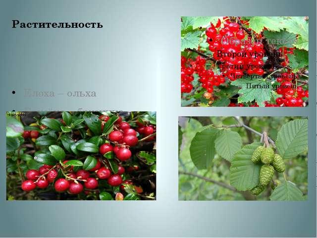 Растительность Елоха – ольха Брусёна – брусника Каманка –красная смородина