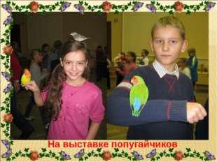 На выставке попугайчиков