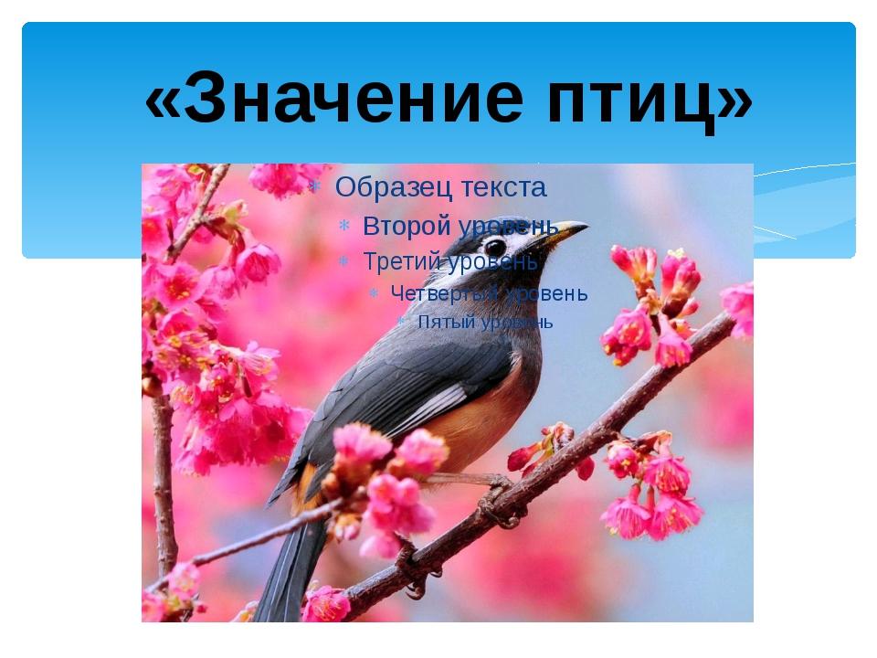 «Значение птиц»