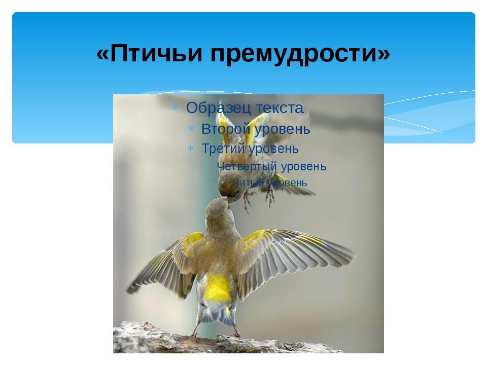 «Птичьи премудрости»