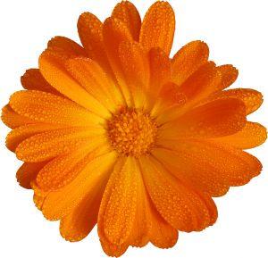 880561_orange_flower