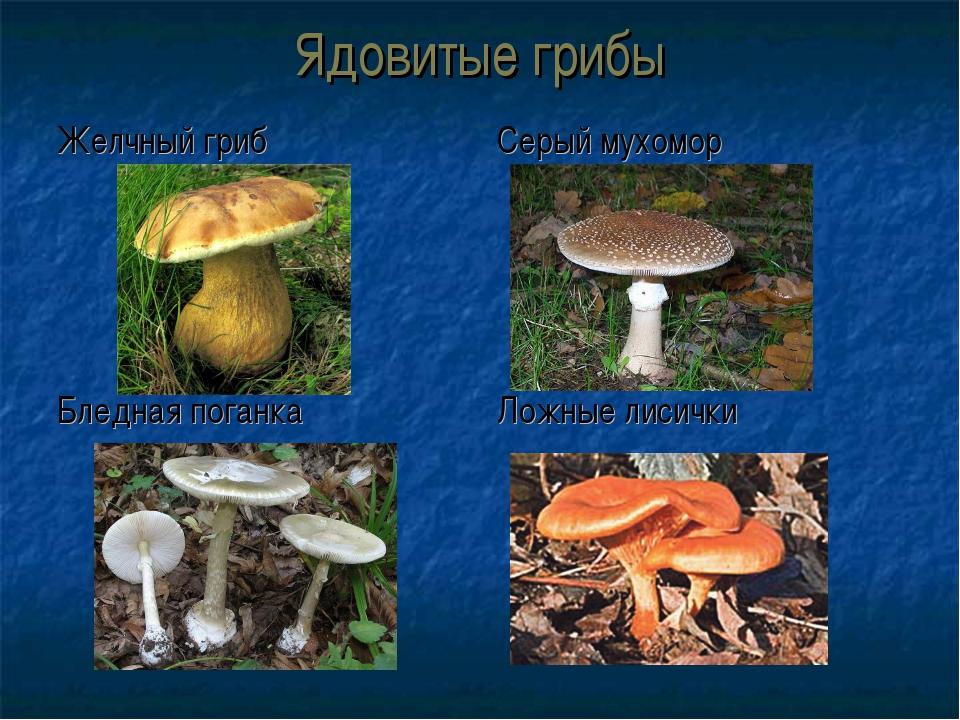 Ядовитые грибы Желчный гриб Бледная поганка Серый мухомор Ложные лисички