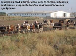 Ферма - сельскохозяйственное предприятие, занимающееся разведением сельскохоз