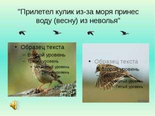 """""""Прилетел кулик из-за моря принес воду (весну) из неволья"""""""