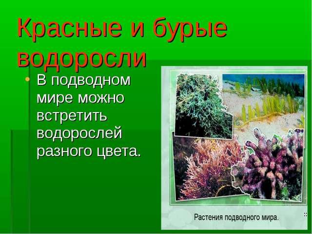 Красные и бурые водоросли В подводном мире можно встретить водорослей разного...