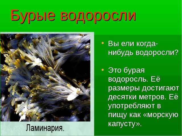 Бурые водоросли Вы ели когда-нибудь водоросли? Это бурая водоросль. Её размер...