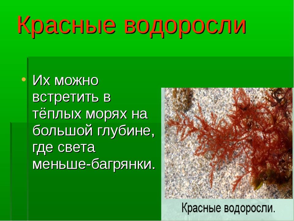 Красные водоросли Их можно встретить в тёплых морях на большой глубине, где с...