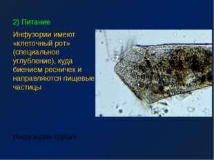 2) Питание Инфузории имеют «клеточный рот» (специальное углубление), куда бие