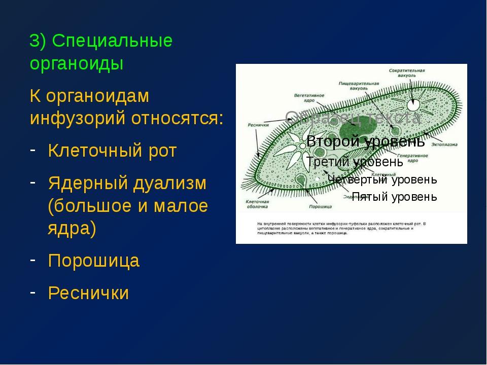 3) Специальные органоиды К органоидам инфузорий относятся: Клеточный рот Ядер...