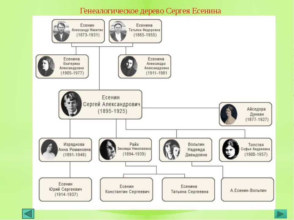 Генеалогическое дерево Сергея Есенина