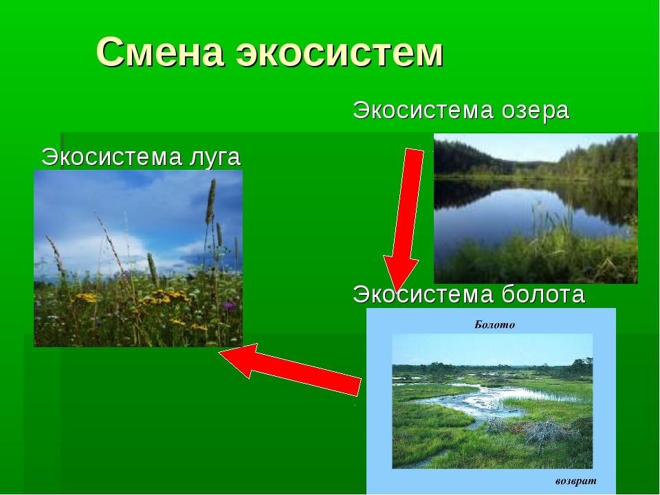 Смена экосистем
