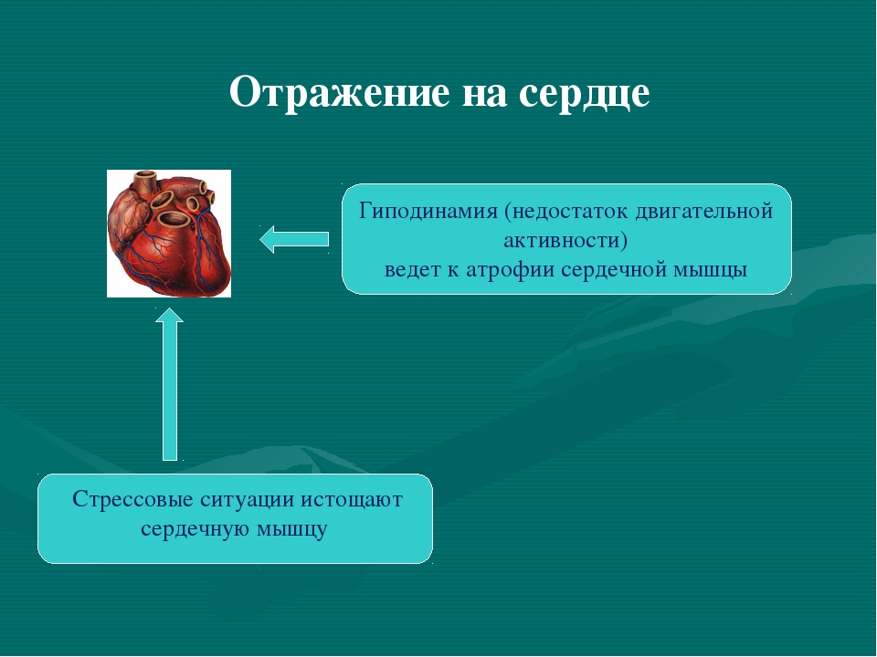 Отражение на сердце Гиподинамия (недостаток двигательной активности) ведет к...