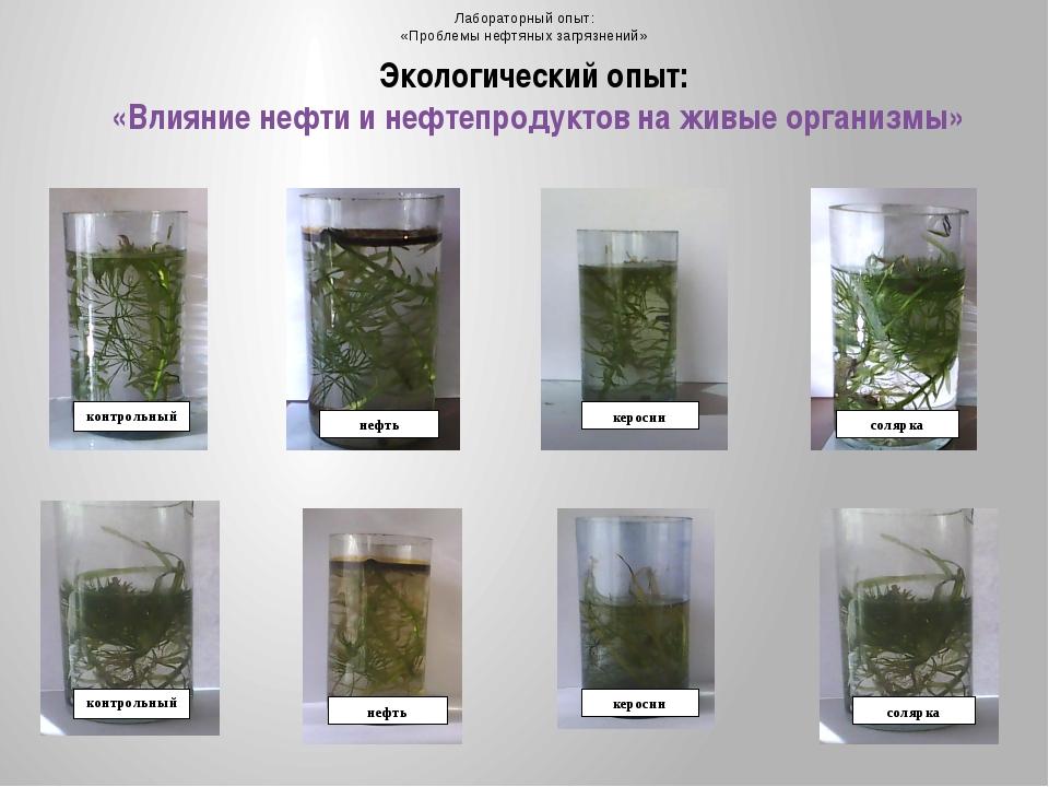 Экологический опыт:  «Влияние нефти и нефтепродуктов на живые организмы»