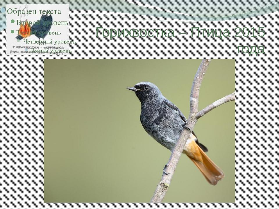 птицы урала летом фото и название наших мехах всегда
