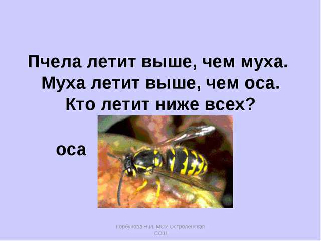 Горбунова Н.И. МОУ Остроленская СОШ Пчела летит выше, чем муха. Муха летит вы...